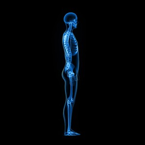 Full-Body-Skeleton
