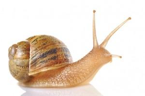 Snail-Reaction-Time
