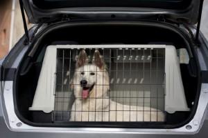Image 3.33B Pet Safety