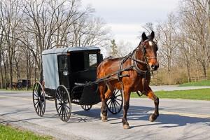 Horse-Drawn-Vehicle