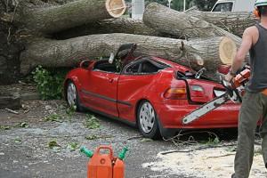 Tree-on-Car